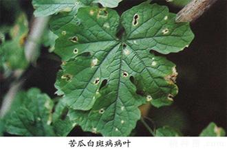 白癜风皮肤病的病因和病根